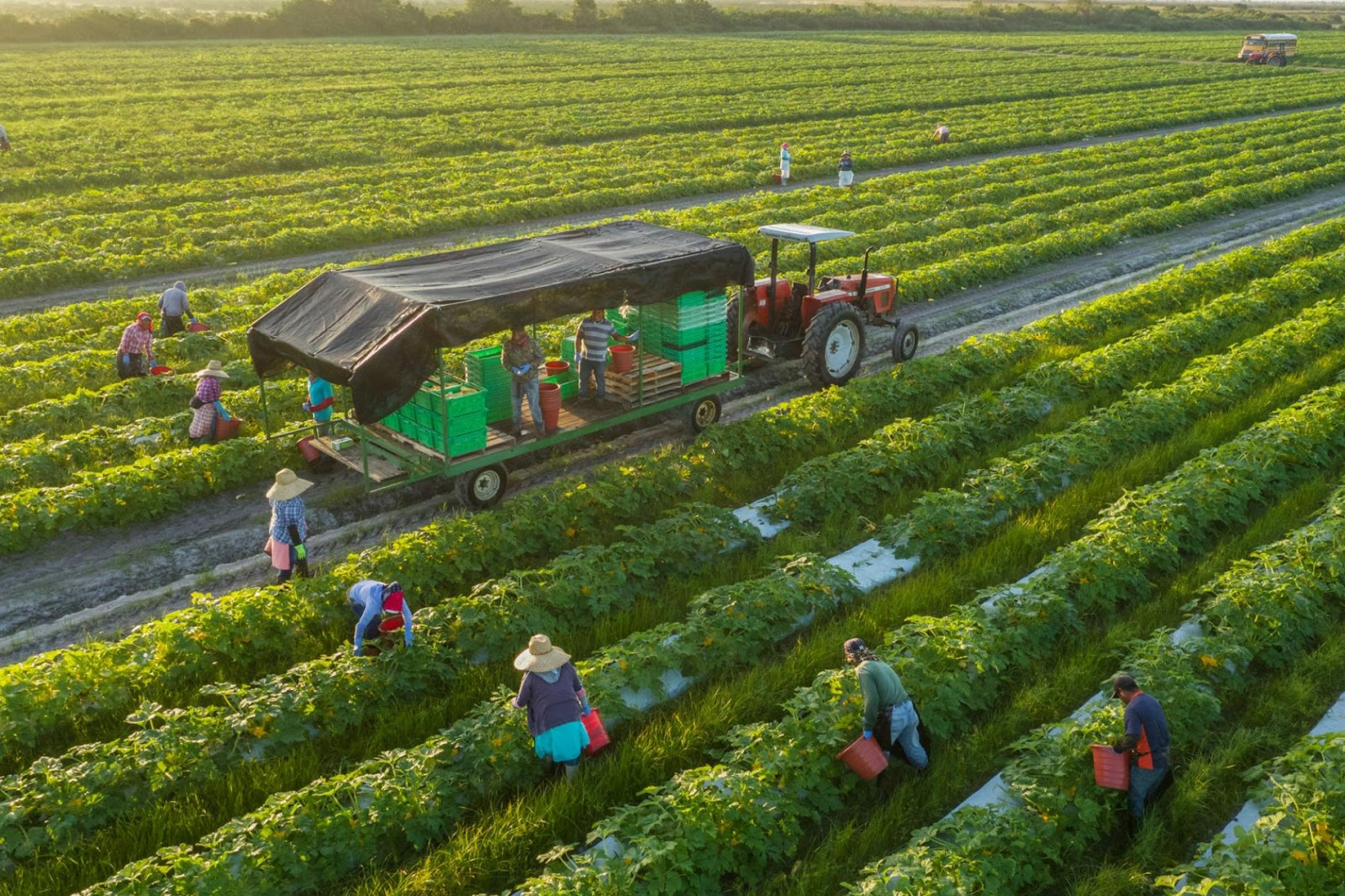 Hầu hết cá nhân chủ trang trại cần vay vốn kinh doanh