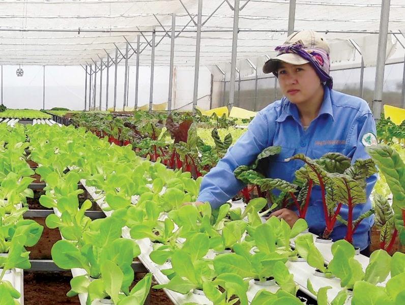 Ngân hàng Agribank có nhiều gói vay hỗ trợ nông nghiệp