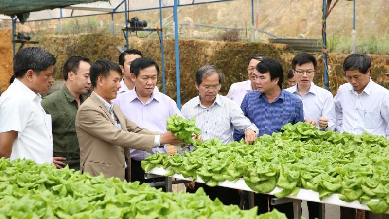 Hợp tác xã cũng nằm trong đối tượng được vay vốn gói hỗ trợ nông nghiệp của Agribank